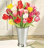tulips-5-1-08.jpg
