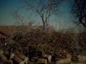 2nd-sd-card-2001-fallen-tree-2nd-set-of-pic-002