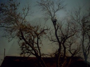 2nd-sd-card-2001-fallen-trees-001